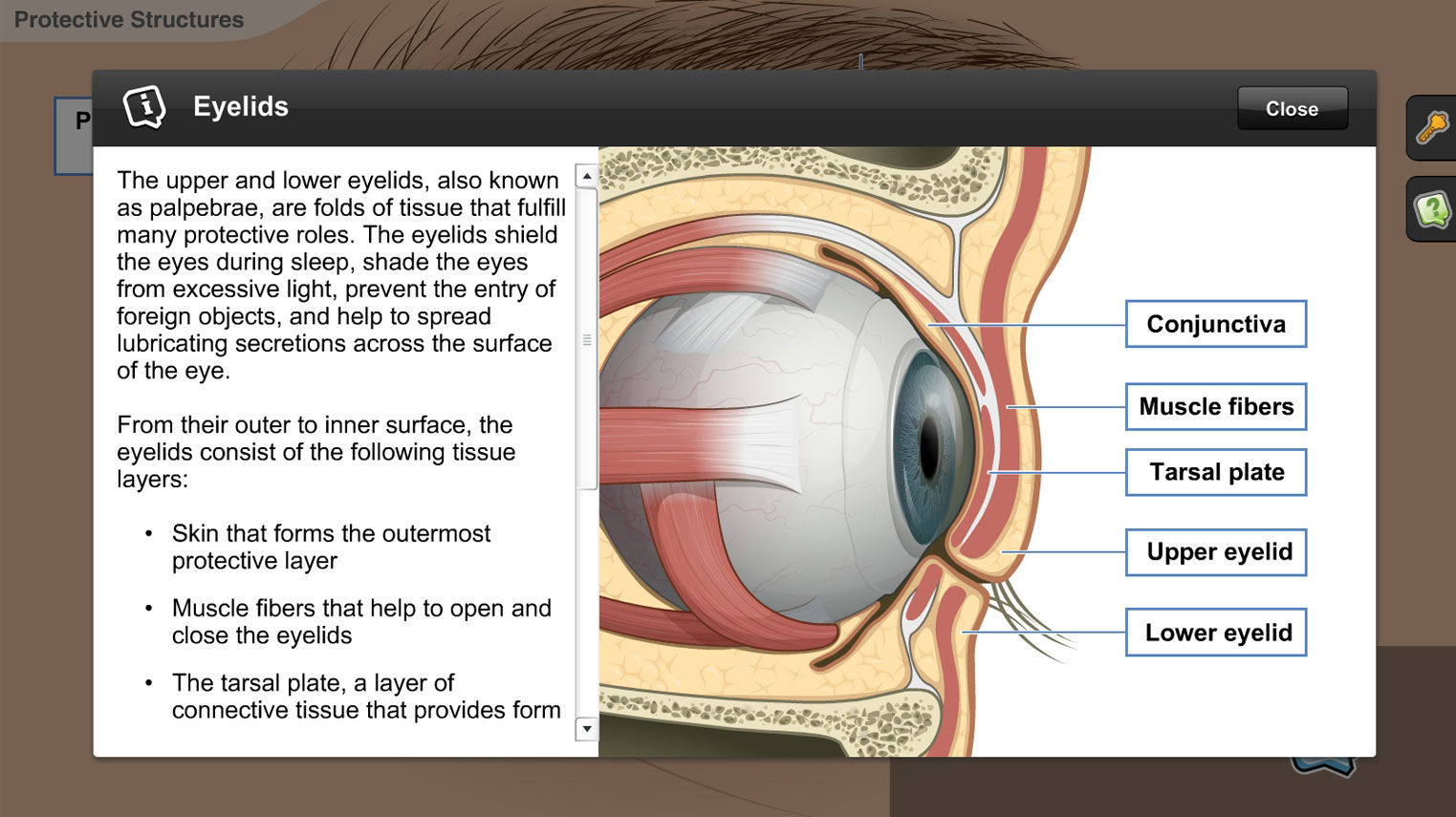 Understanding the Anatomy of the Visual System