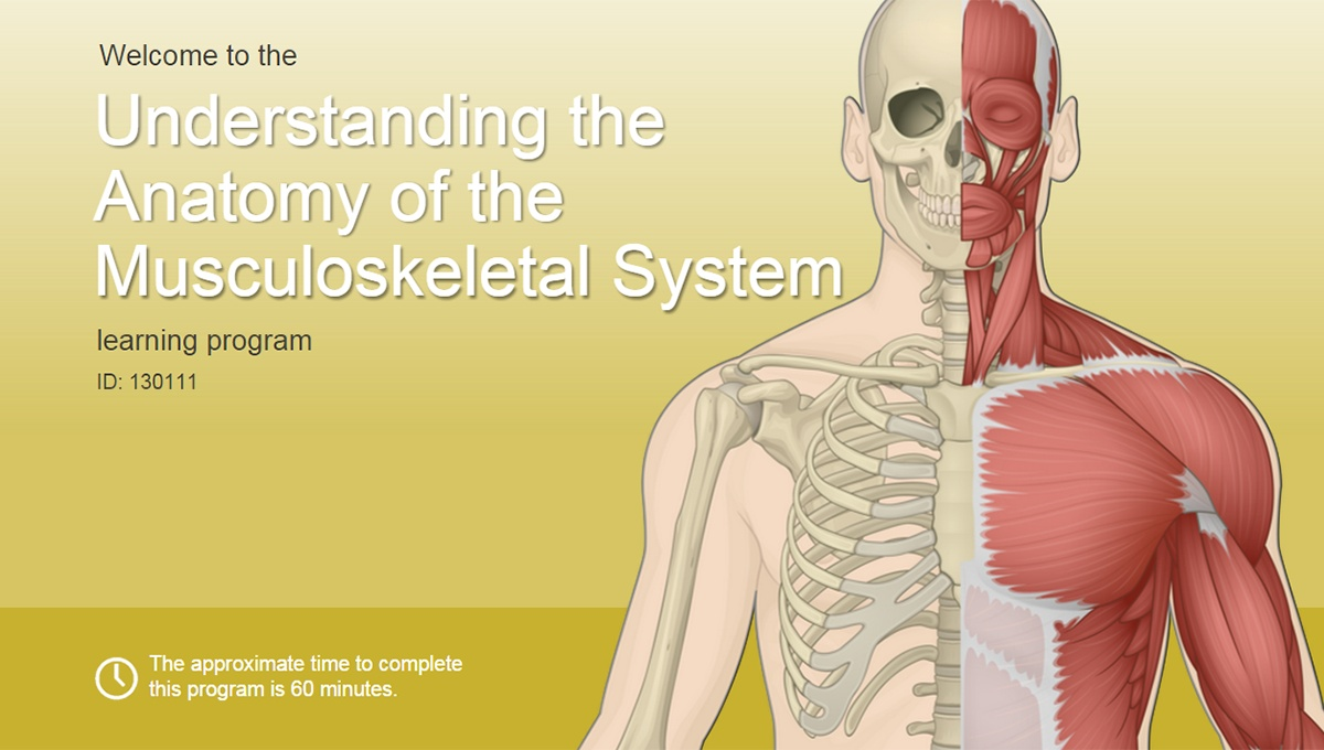 Understanding the Anatomy of the Musculoskeletal System